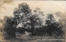 CUAMATO CAMINHO DA COLUMNA PELA MATTA DE VINDAMO CPA AN 1920 VOYAGEE A LOS POLVORINES ARGENTINA - Angola