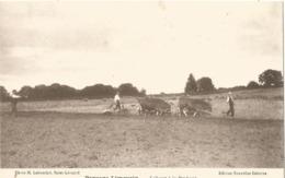 Paysage Limousin - Labour à La Brabant - Cultivation