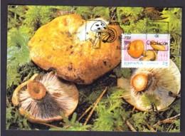 36.- SPAIN ESPAGNE 1993 MAXIMUM CARD. MUSHROOMS CHAMPIGNON SETAS FUNGI Lactarius Sanguifluus - Hongos