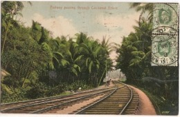Ceylon & Ultamar, Railway Passing Through Coconut Estate, Colombo To Lisbon 1912 (111) - Royaume-Uni