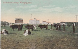 WINNIPEG -AGRICULTERAL COLLEGE - Winnipeg