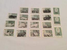 FULL Set 18 USSR Barnaul 1988 Stickers Matchbox Match Labels. Soviet Breeders. Rabbits. Nutria. Flanders. Chinchilla. - Matchbox Labels