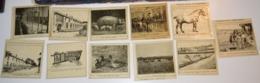 Très Rare Ancêtre De La Diapositive Lot De 11 Images Sur La Ferme Modèle - Autres