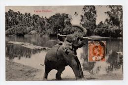 - CPA Ceylan / Sri Lanka - Ceylon Elephant 1915 - Pub. Plâté N° 194 - - Sri Lanka (Ceylon)