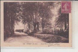 76 -  YPORT -  Sous-Bois  1935 - Yport