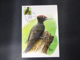 "BELG.2009 3939 FDC Mcard: Buzin "" Pic Noir / Zwarte Specht "" - 1985-.. Pájaros (Buzin)"