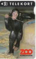 DENMARK - Zoo Copenhagen/Chimpanzee, Tirage 3500, 04/95, Used - Dänemark