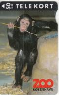 DENMARK - Zoo Copenhagen/Chimpanzee, Tirage 3500, 04/95, Used - Denemarken