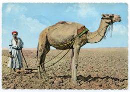 Jordan - Camel - Giordania