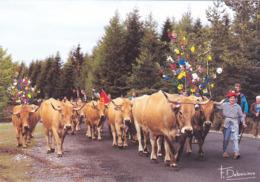 CPSM 12 @ AUBRAC AVEYRON - La Montée à L'estive - Vaches De Race Aubrac - Debaisieux 647 - Otros Municipios