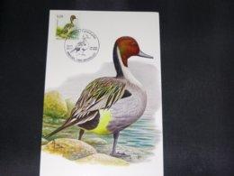 """BELG.2011 4091 FDC Mcard: Buzin """" Pijlstaart- Canard Pilet   """" - 1985-.. Birds (Buzin)"""