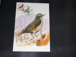 """BELG.1996 2653 FDC Mcard: Buzin """" Koperwiek / Grive Mauvis  """" - 1985-.. Birds (Buzin)"""