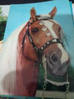 CAVALLO HORSE  TESTA HEAD  E FINIMENTI N1980 HG1400 - Cavalli