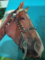 CAVALLO HORSE  TESTA HEAD  E FINIMENTI N1980 HG1401 - Cavalli