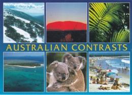 CPM KOALA AUSTRALIA - Animaux & Faune