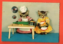 KAA-36 Chats Habillés, A La Cuisine.  Circulé Sous Enveloppe. - Animali Abbigliati