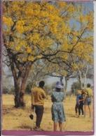 ZAMBIA'S Flowering - Zambia