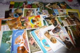 LOT DE 70 CARTES ..ANIMAUX HUMORISTIQUES - Cartoline