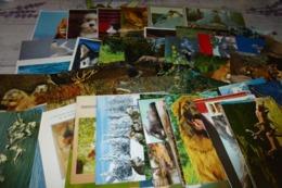 LOT DE 65 CARTES ..ANIMAUX - Cartoline