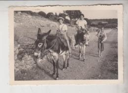 Fotografia Originale Asino Mulo Ane Donkey Giannutri? Grosseto Livorno - Sonstige