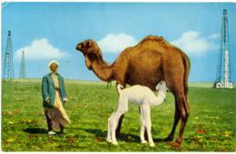IRAQ  Camel  The Ship Of Desert  Oil Wells - Animali