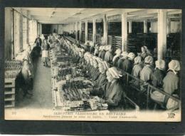 CPA - DOUARNENEZ - Industrie Sardinière En Bretagne - Usine Chancerelle - Sardinières Faisant La Mise En Boîtes, Très An - Douarnenez