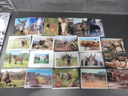 LOT   DE 104  CARTES  POSTALES   D ANES - Cartes Postales