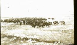 CANADA SHAUNAVON LA FETE EN 1922   RANCHE CHEVAUX PHOTO CARTE - Altri