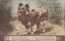 AO34 Animal Postcard - Dog On A New Year's Card - Cani