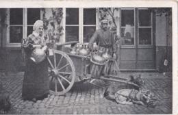 Laitières Flamandes ( Attellage De Chien - Teams