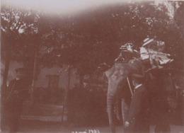 Photographie Anonyme Vintage Snapshot Elephant Enfant Child Attraction - Non Classificati