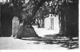 """CPA TAMANRASSET -""""une Petite Rue"""" -édition LAROUI - Autres Villes"""