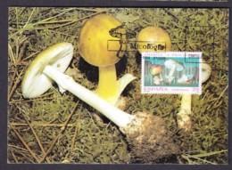 37.- SPAIN ESPAGNE 1994 MAXIMUM CARD. MUSHROOMS CHAMPIGNON SETAS FUNGI Amanita - Hongos