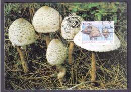 38.- SPAIN ESPAGNE 1993 MAXIMUM CARD. MUSHROOMS CHAMPIGNON SETAS FUNGI Lepiota Procera - Hongos