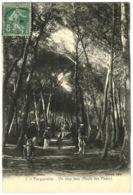83 - Ile De Porquerolles - Un Sous Bois Route Des Mède - Porquerolles