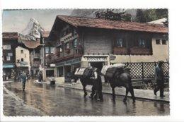 22681 - Zermatt Mulets Transporteurs Mûle, Cervin, Matterhorn - VS Valais