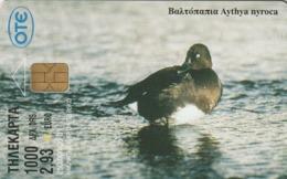 GRECIA. PATOS. Ferruginous Duck, Aythia Nyroca. 05/2001. X1122. (107). - Pájaros