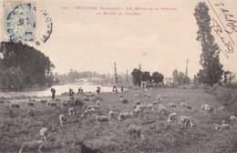 31 - TOULOUSE - Les Bords De La Garonne Au Ramier Du Château. - Toulouse