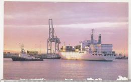 Uncirculated Postcard - Ships - Container Terminal, Port Elisabeth - Fähren