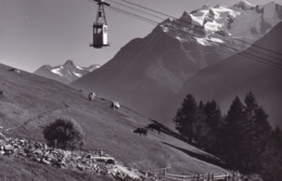 Stalden * Luftseilbahn Staldenried - Gspon, Kühe, Seilbahn, Alpen * Schweiz * AK1665 - VS Valais
