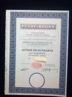 1 Sté PECHELBRONN  Action + Coupons - Aandelen