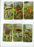 11 X Chromo's : Paddestoelen - Champignons - Mushrooms ( With Discription On Back Side ) Chromo's  10 X 5 Cm - Autres