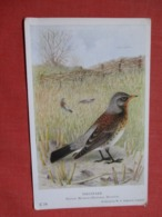 Birds  Fieldfare  Ref 3702 - Birds