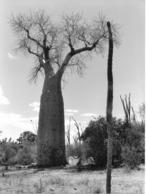 Photo Madagascar Dans La Forêt D'épineux Au Sud Près De Taolanaro (ancien Fort Dauphin) 1998 Vivant Univers - Africa