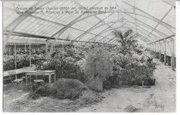 Groupe De Serres Chaudes Constuit En 1914 à Mont St Amand-lez- Gand - Stamped Stationery