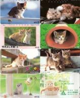 LOTE DE 8 TARJETAS TELEFONICAS DE JAPON. (GATOS - CHATS - CATS) (202) - Gatos