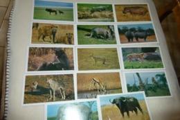 LOT DE 14 CARTES ANIMAUX ..SAFARI PRISUNIC ... - Cartes Postales