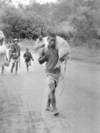 Photo Madagascar Sur La Route Fianarantsoa Ambositra, Paysan Porte Son Cochon 1998 Vivant Univers - Afrika