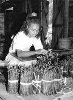 Photo Madagascar Atelier De Conditionnement De Vanille à Antalaha 1998 Vivant Univers - Afrique