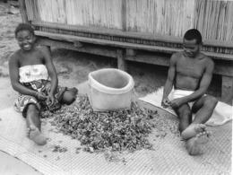 Photo Madagascar Antalaha Triage Des Clous De Girofle 1998 Vivant Univers - Afrika